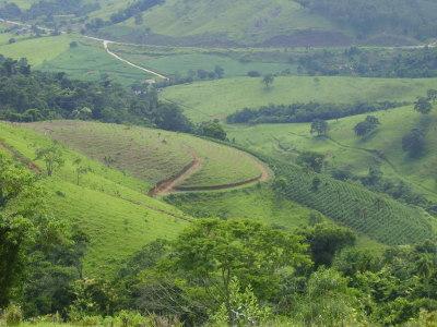 Brazil Inglaterra Special Fazenda Toca da Onca Canario 2008-2009 Crop