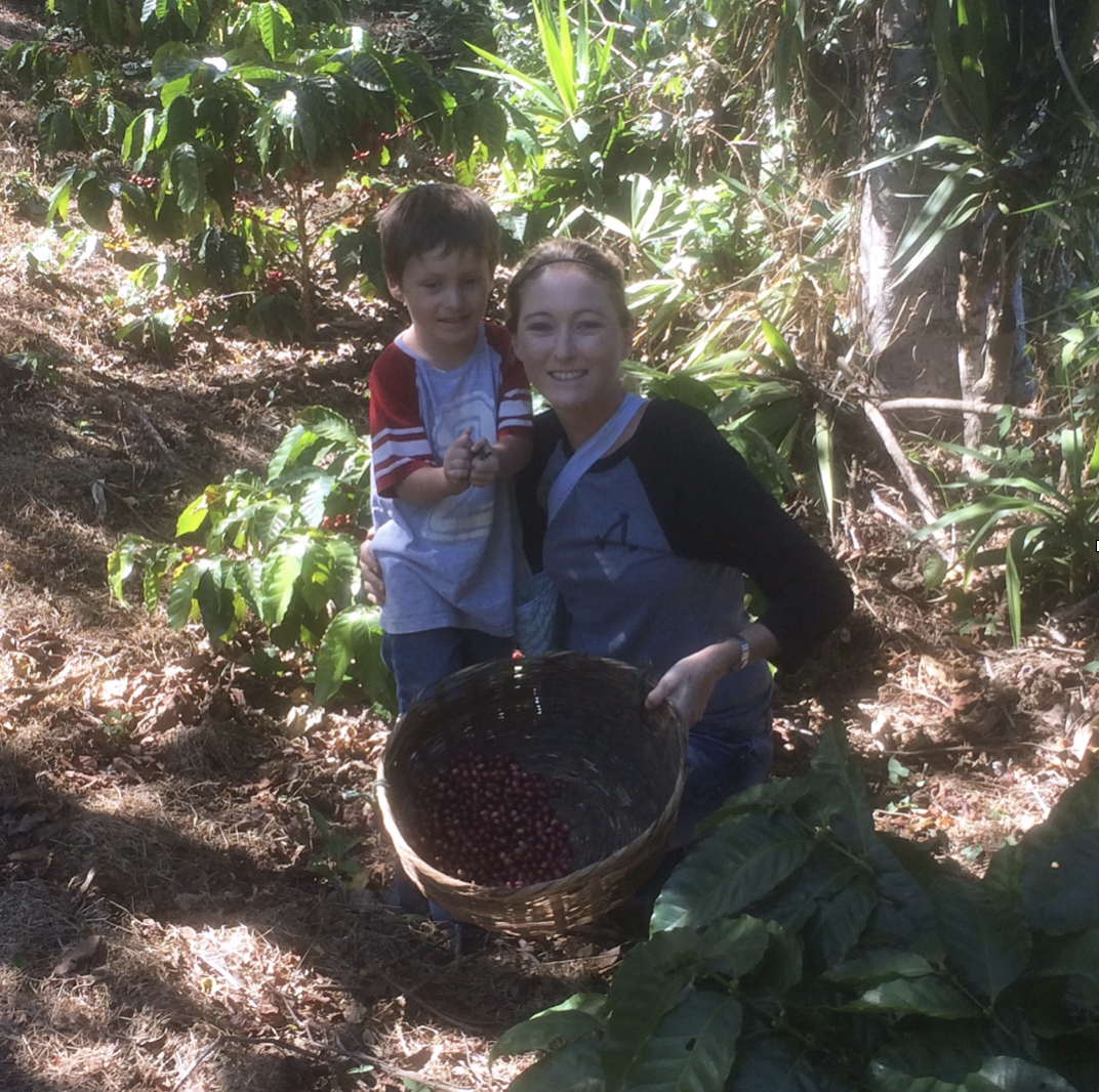 Child labour and coffee harvesting